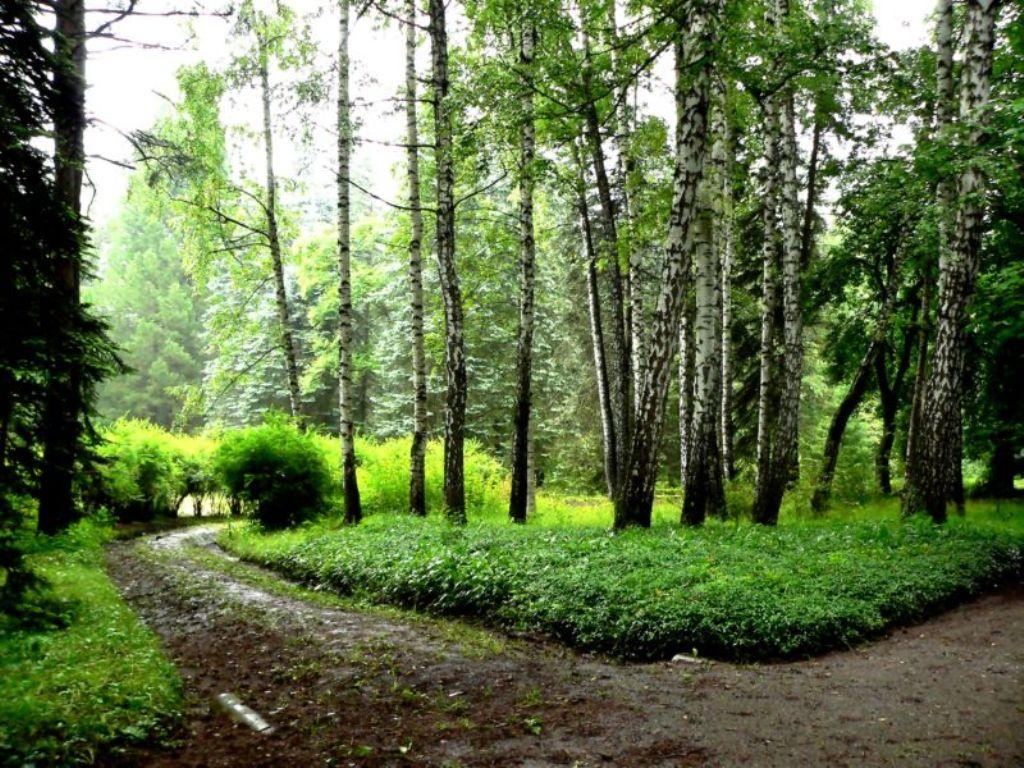 Stepanavan Dendropark - Sochut